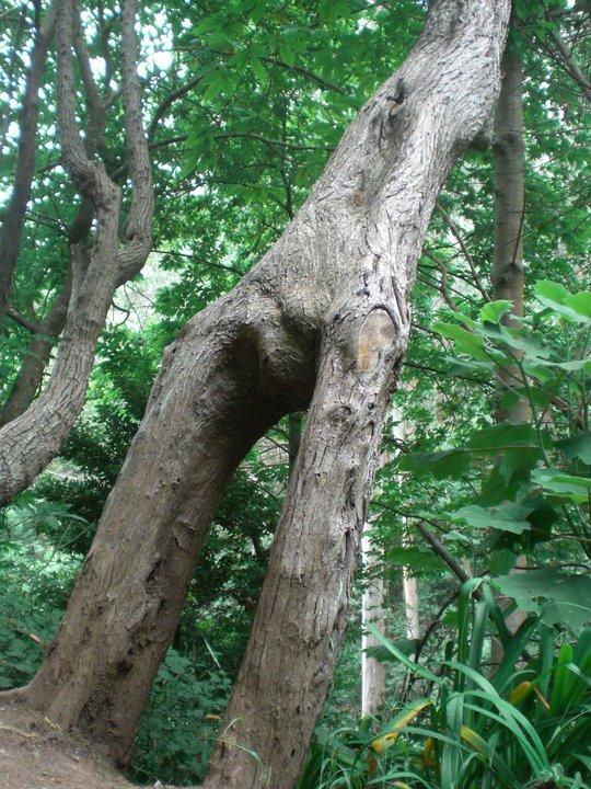 Curioso tronco de árbol en bosque de Madeira