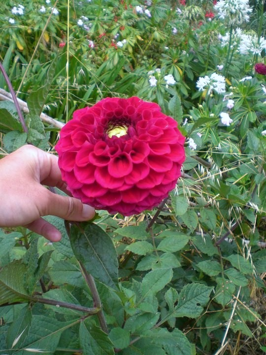 Flor en bosque de Madeira
