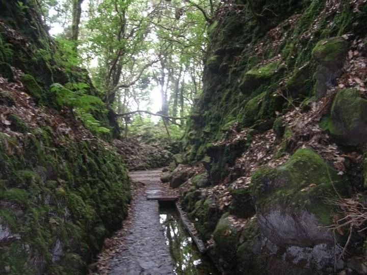 """""""Levada"""" atravesando bosque de laurissilva"""